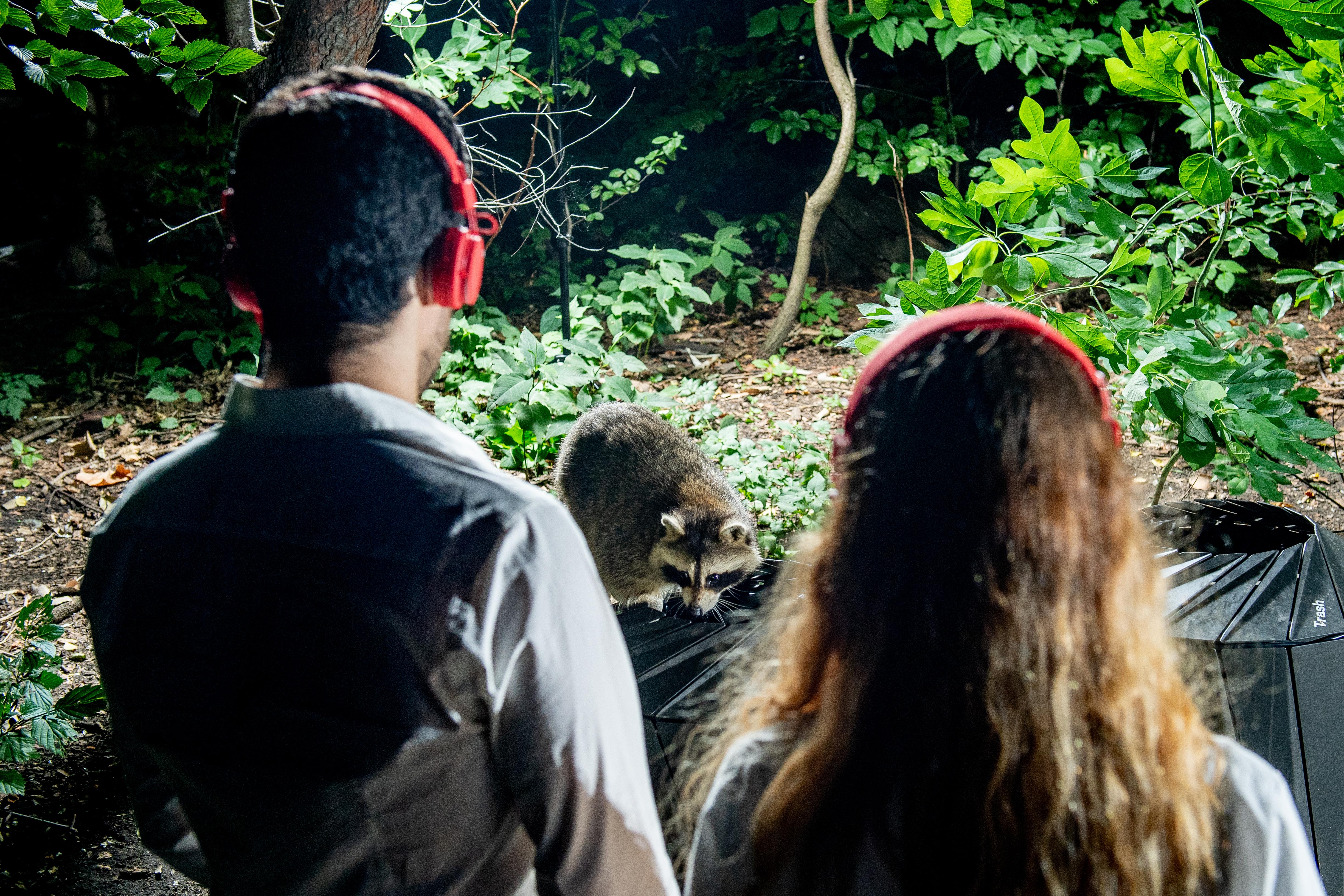 raccoons headphones tour